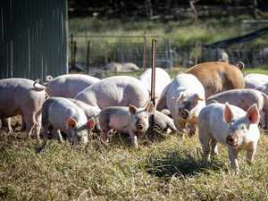 Why Aussie pork farmers aren't bringing home the bacon