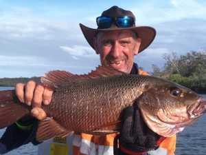 FISHING REPORT: Recent rain stirs up mudcrabs
