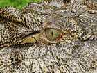 WATCH: 3m croc spotted near Fitzroy Barrage