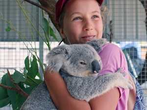 Cuddly koalas earn carers a prize