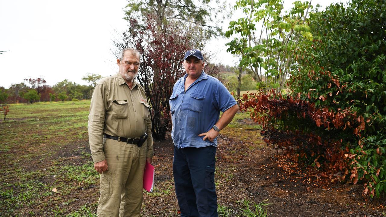 Bungundarra lychee growers Jack and Eddie Cowie.
