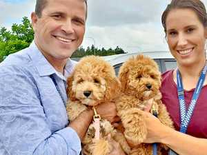 'Never lost hope': Stolen puppies found after five weeks