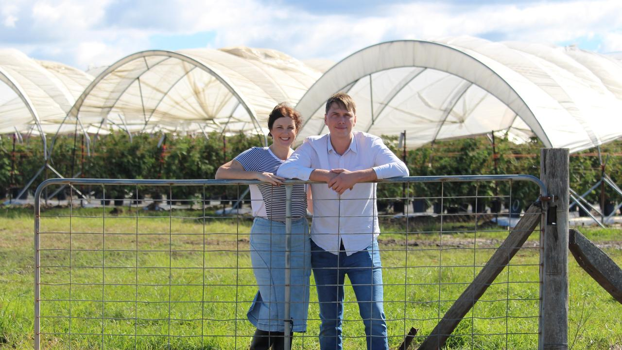 Allison and Stuart McGruddy at their My Berries farm in Caboolture. Their berries will be used in a new Tim Tam flavour.