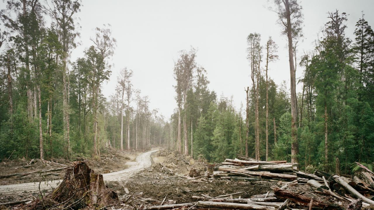 Deforestation in old growth forest in Upper Florentine, 70km from Hobart in Tasmania. Picture: Michael Hall