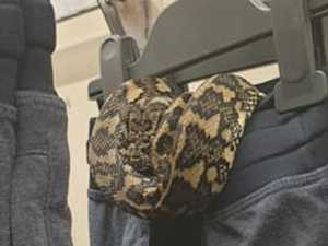 Nightwear nightmare as snake gets cosy in QLD shop