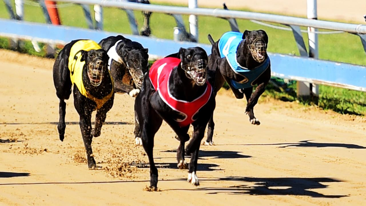 There are 10 races on the program at Wednesday night's greyhound meeting in Rockhampton. Picture: Alix Sweeney