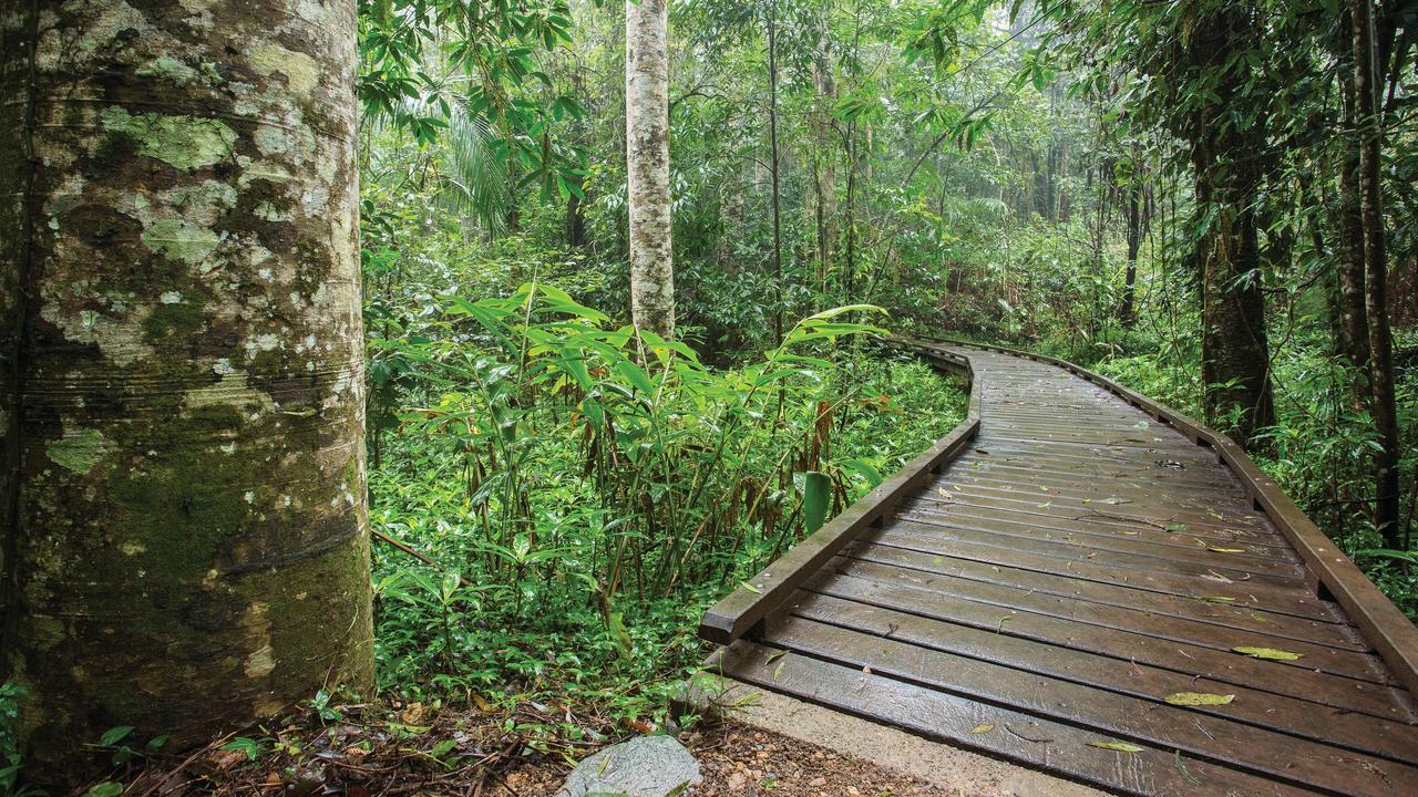 The lush Eungella rainforest. Picture: Mackay Tourism