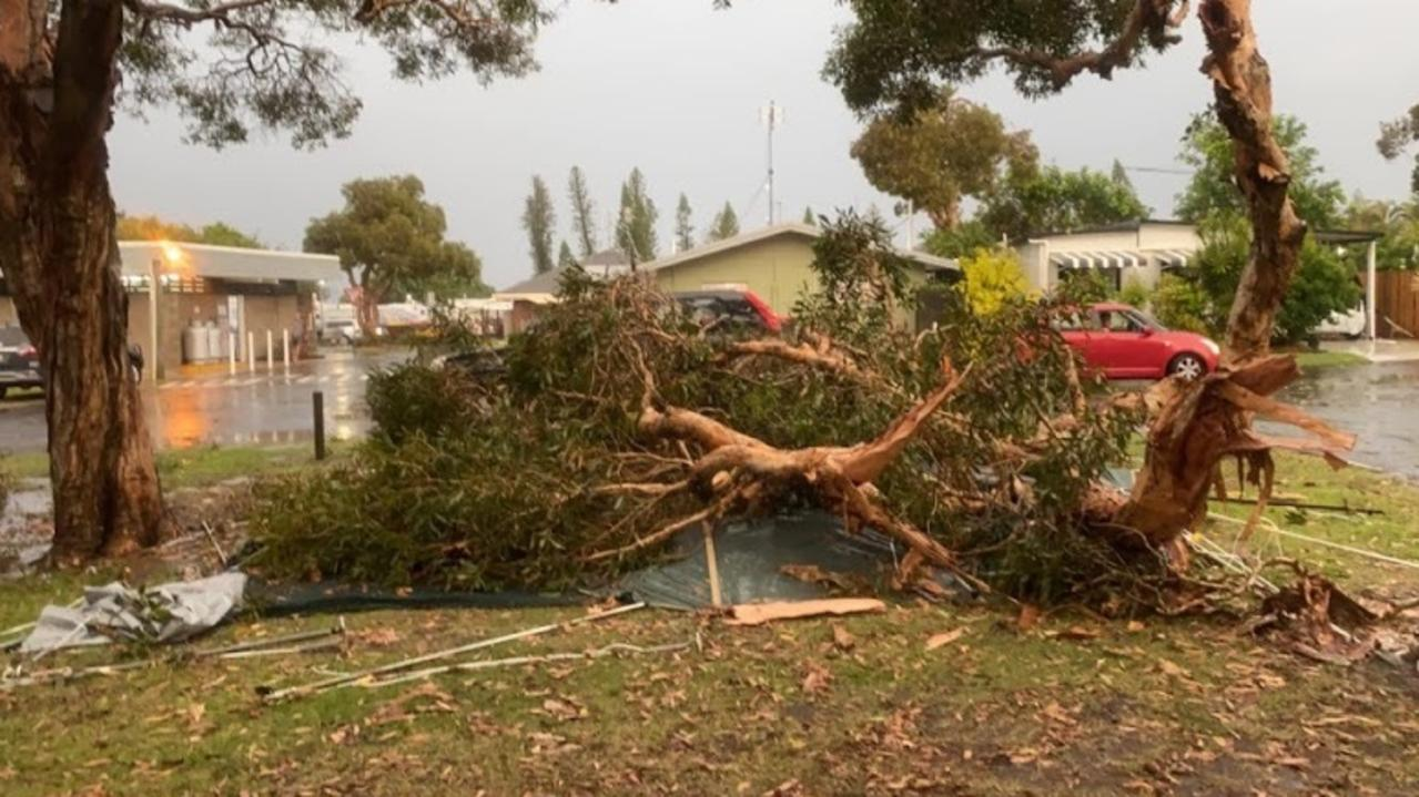 A tree was uprooted and fell on a tent in Dicky Beach Caravan Park during Saturday's storm.
