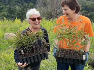 Extensive bush regeneration efforts have huge impact