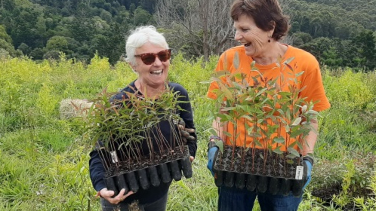 Linda Sparrow (left) and Claire Oerlichs from Bangalow Koalas. Picture: Byron Shire Council