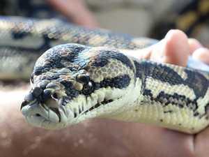 Four injured in separate snake bites on Coast