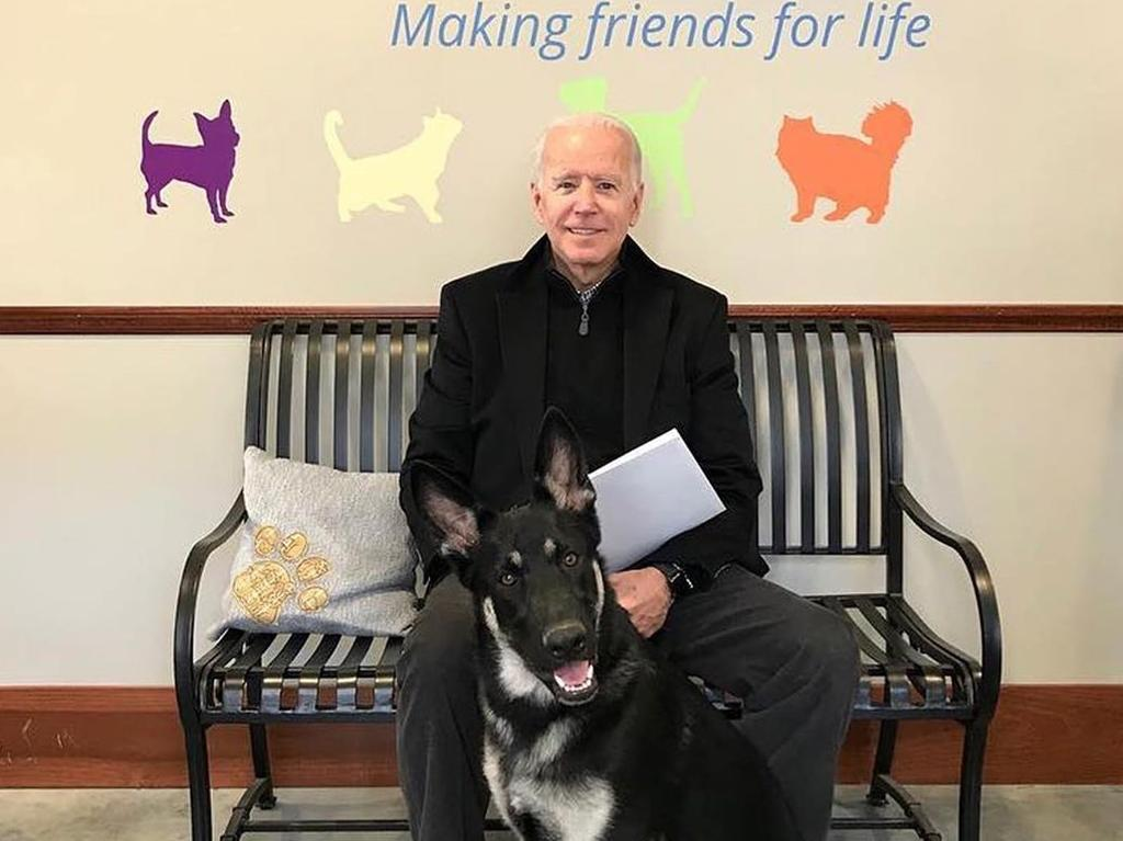Joe Biden adopted a German Shepherd rescue dog in 2018. Picture: Instagram