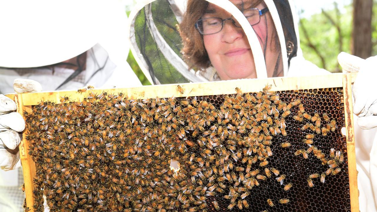 Bundaberg Beekeepers Association president Bec Pohlner. Picture: Mike Knott