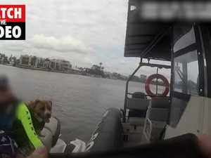 Dog is a pillion passenger on jetski