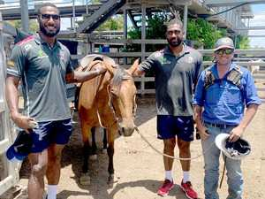 Reds rugby stars see records at cattle sale