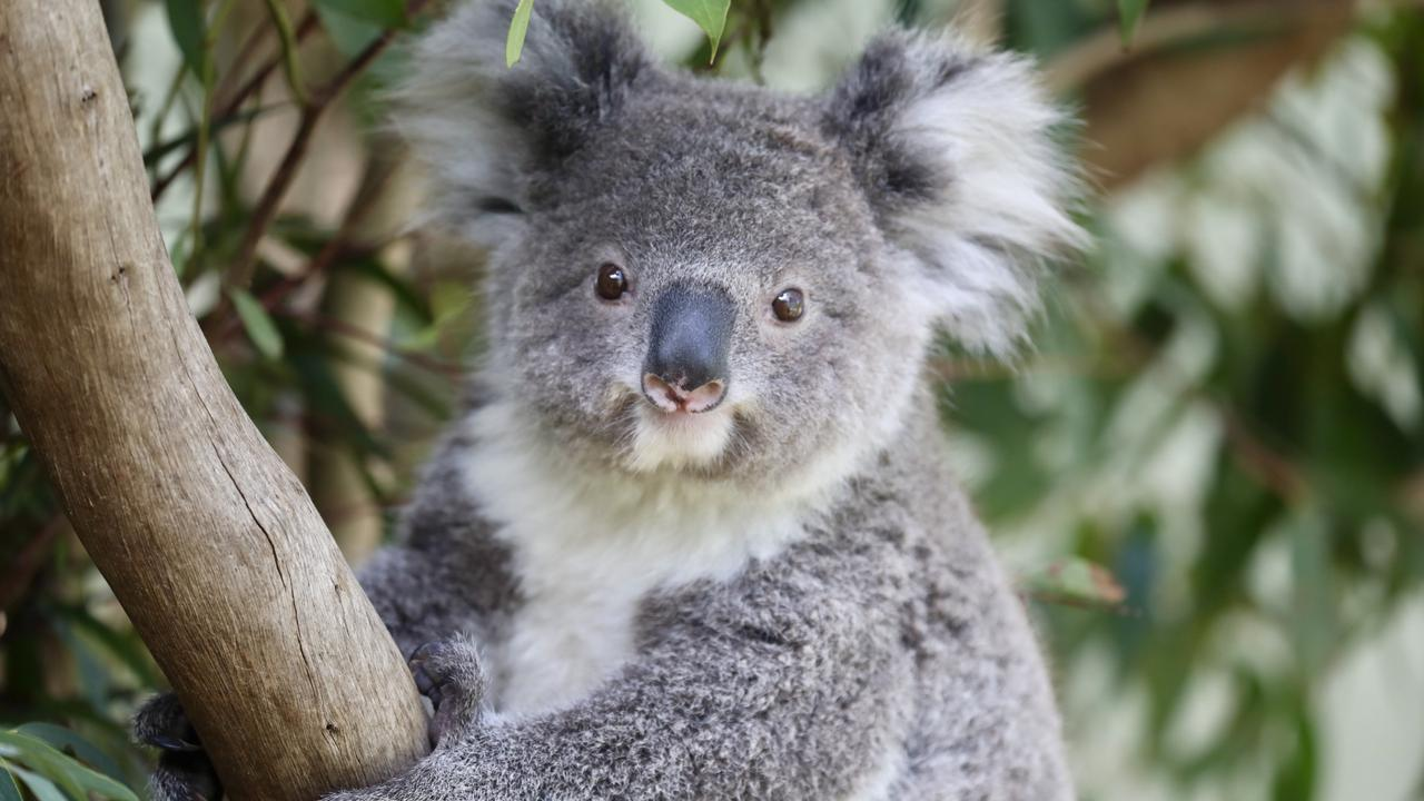 The ANARRA Wildlife Rescue Group says small grants provided to community organisations generate a significant in kind contribution which benefits the Gympie region environment and community.
