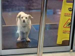 Dog waits for owner at hospital for days