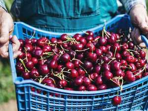 China detects 'virus traces' on cherries