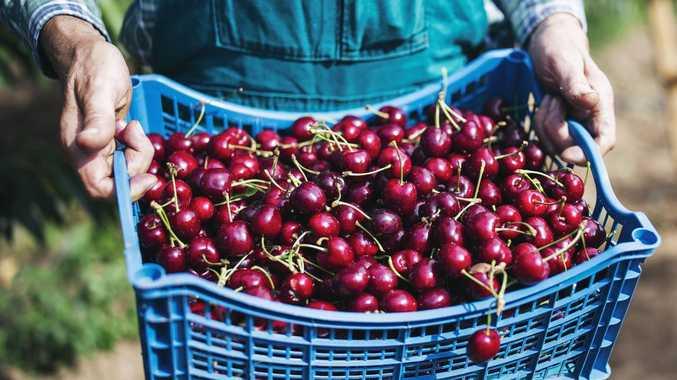 China detects 'virus traces' on cherries