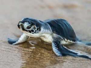 Register now: How you can clean up for the hatchlings