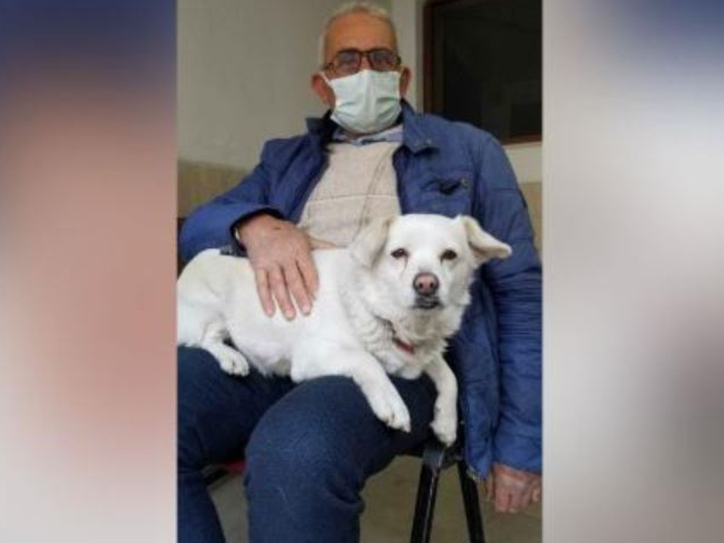 The pooch was waiting for her owner of nine years, Cemal Senturk, while he was in hospital. Picture: Medical Park Hospital