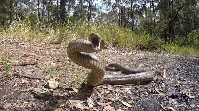 Woman bitten by snake during Bunya Mountains hike