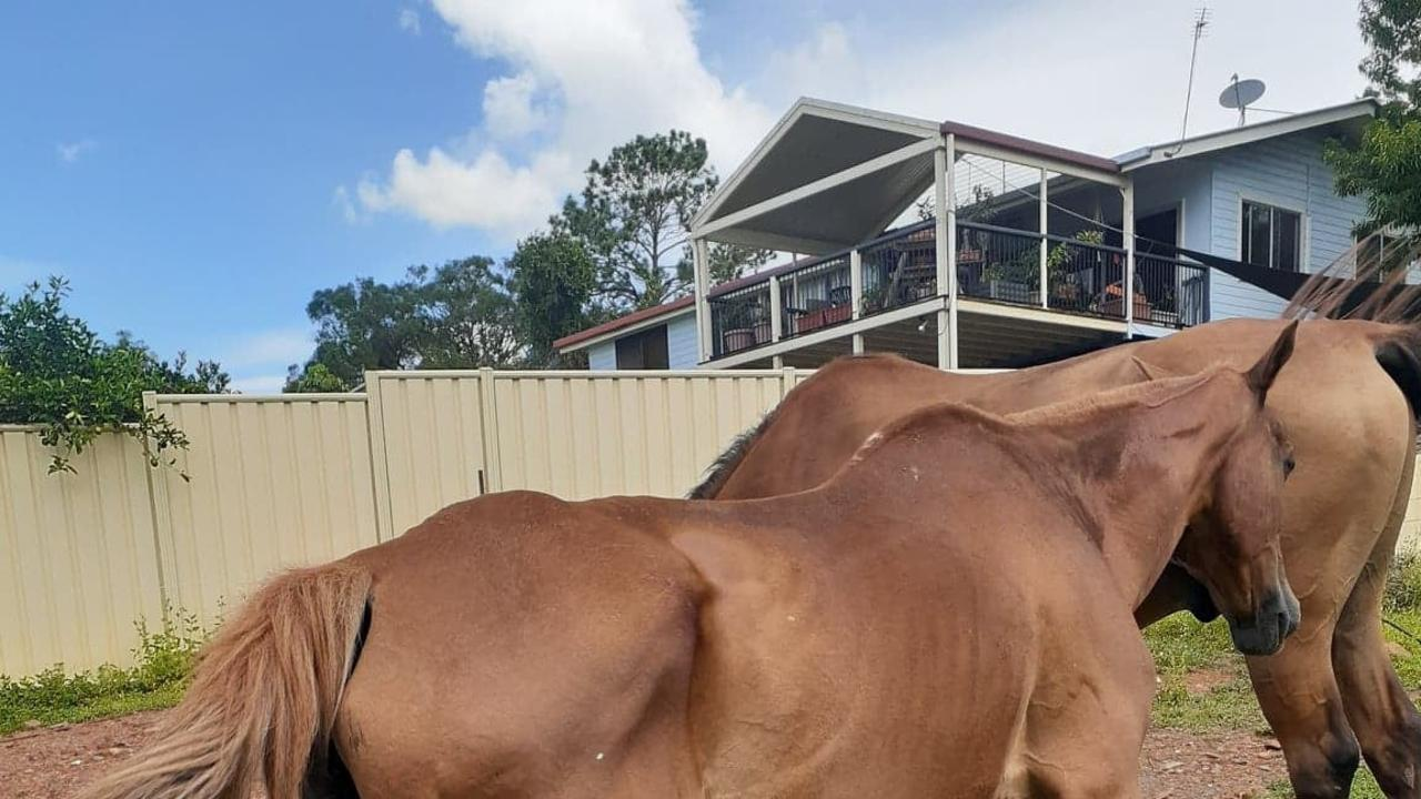 Residents have raised concerns for a horse in a paddock in Monkland. Photo: Supplied by Mavis Marshall