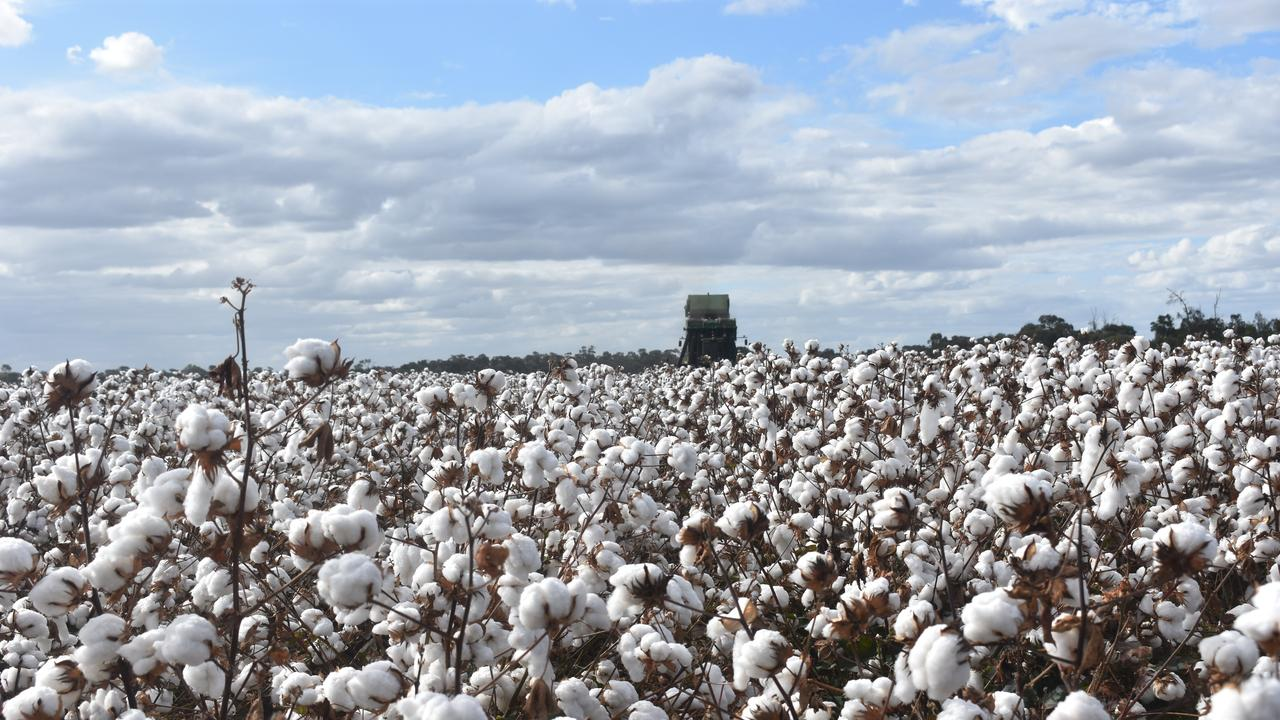 CONGRATS KIM: Dalby accountant Kimberley Fawkes has been selected to be part of a national cotton leadership program. Picture: File