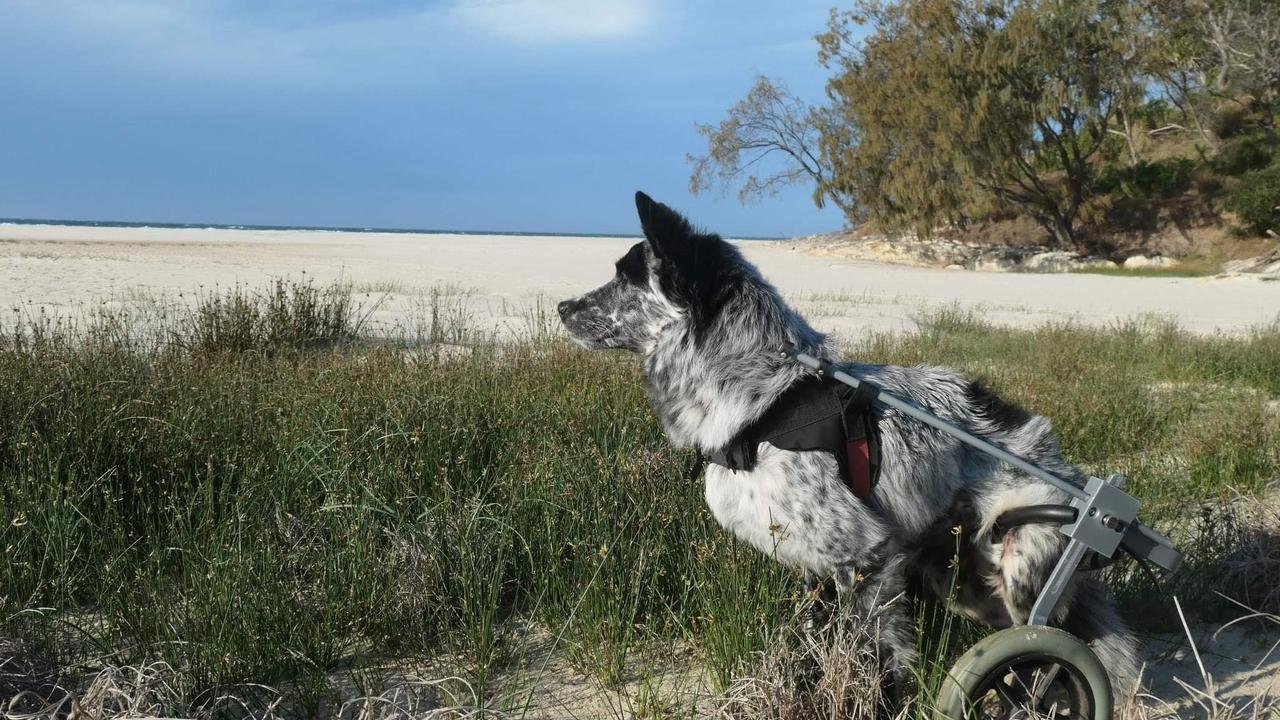 Slider enjoy some leisure time at the beach. Picture: RSPCA
