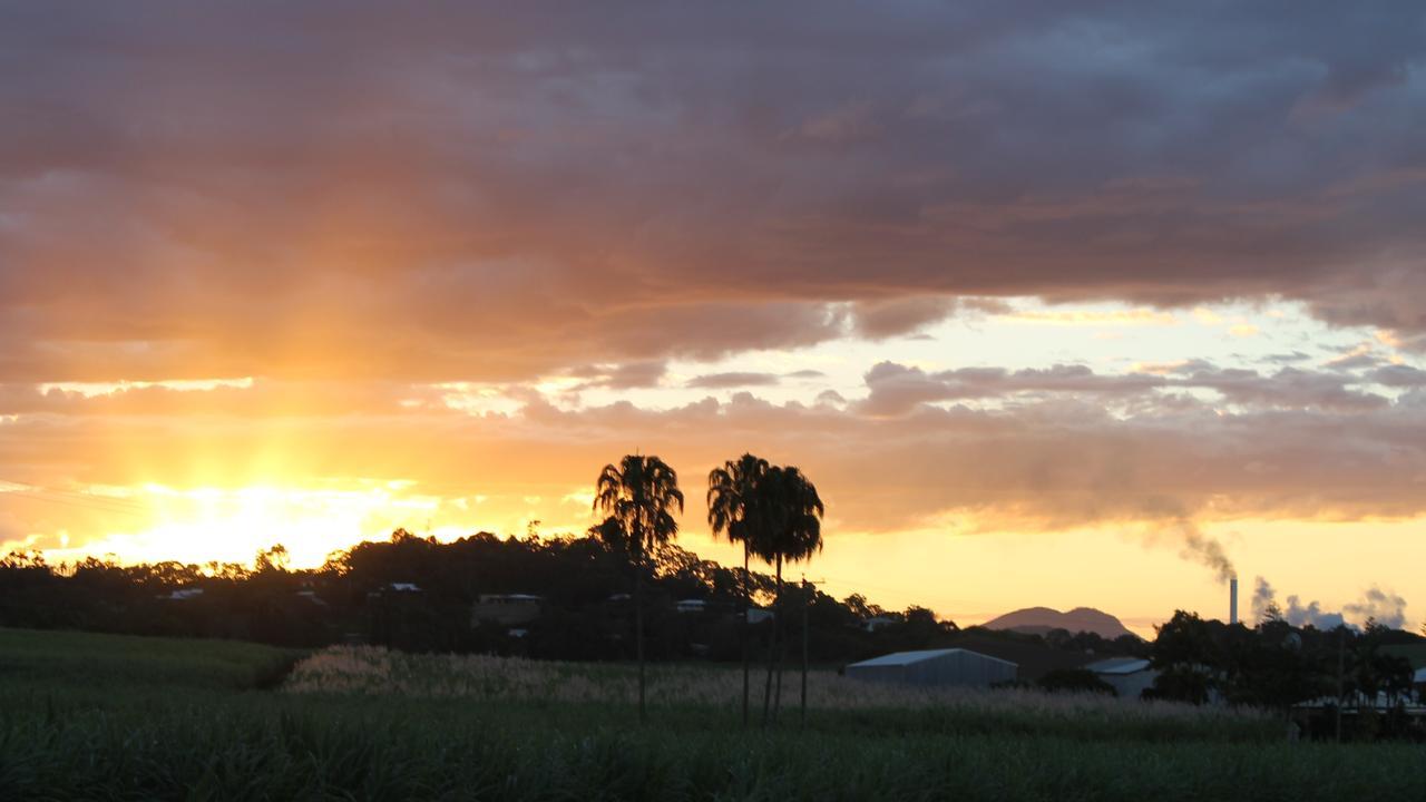 Canefields near Farleigh Mill, north of Mackay. Picture: Kirili Lamb