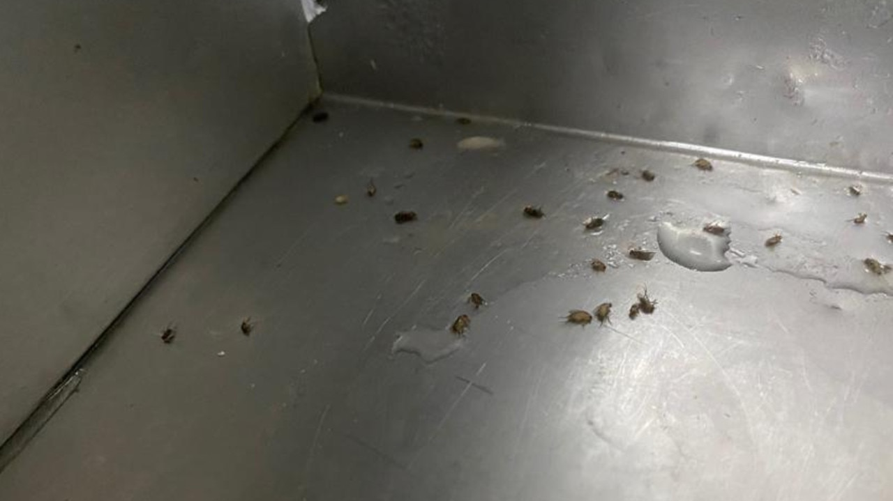 Inspectors alleged that cockroaches were found at Cici's Pizza Kitchen at Hindmarsh. Picture: Supplied