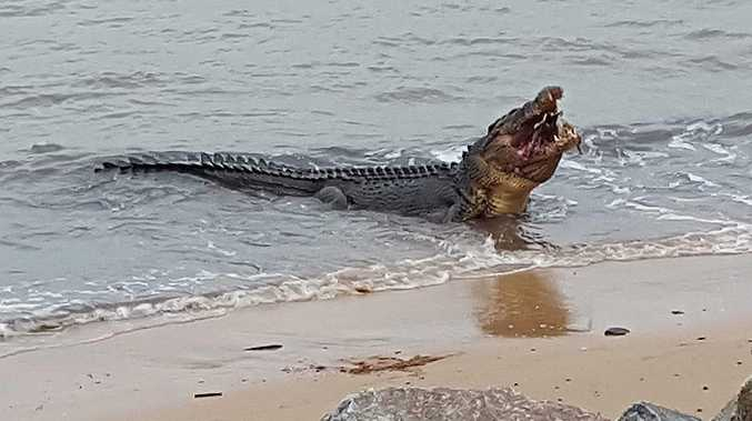 Croc attack: Swimmer pulls jaws from own head