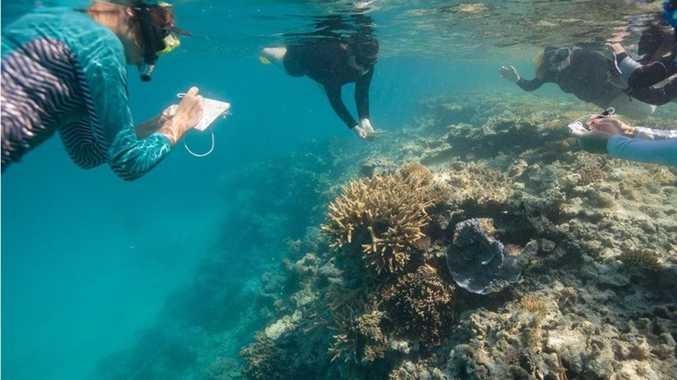 Proposed reef regulations may impact Burnett landowners