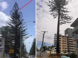 Residents call for 'jail time' over damaged tree