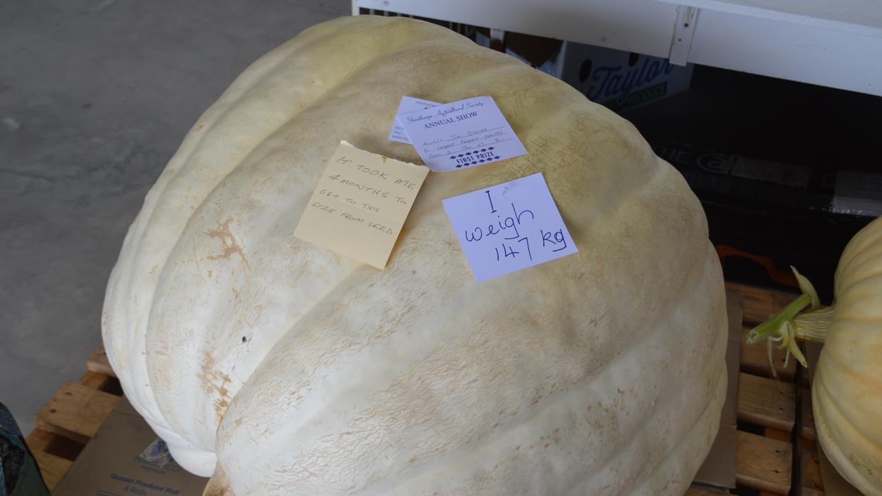 Jim Baxter's award-winning pumpkin at the 2021 Stanthorpe Show.
