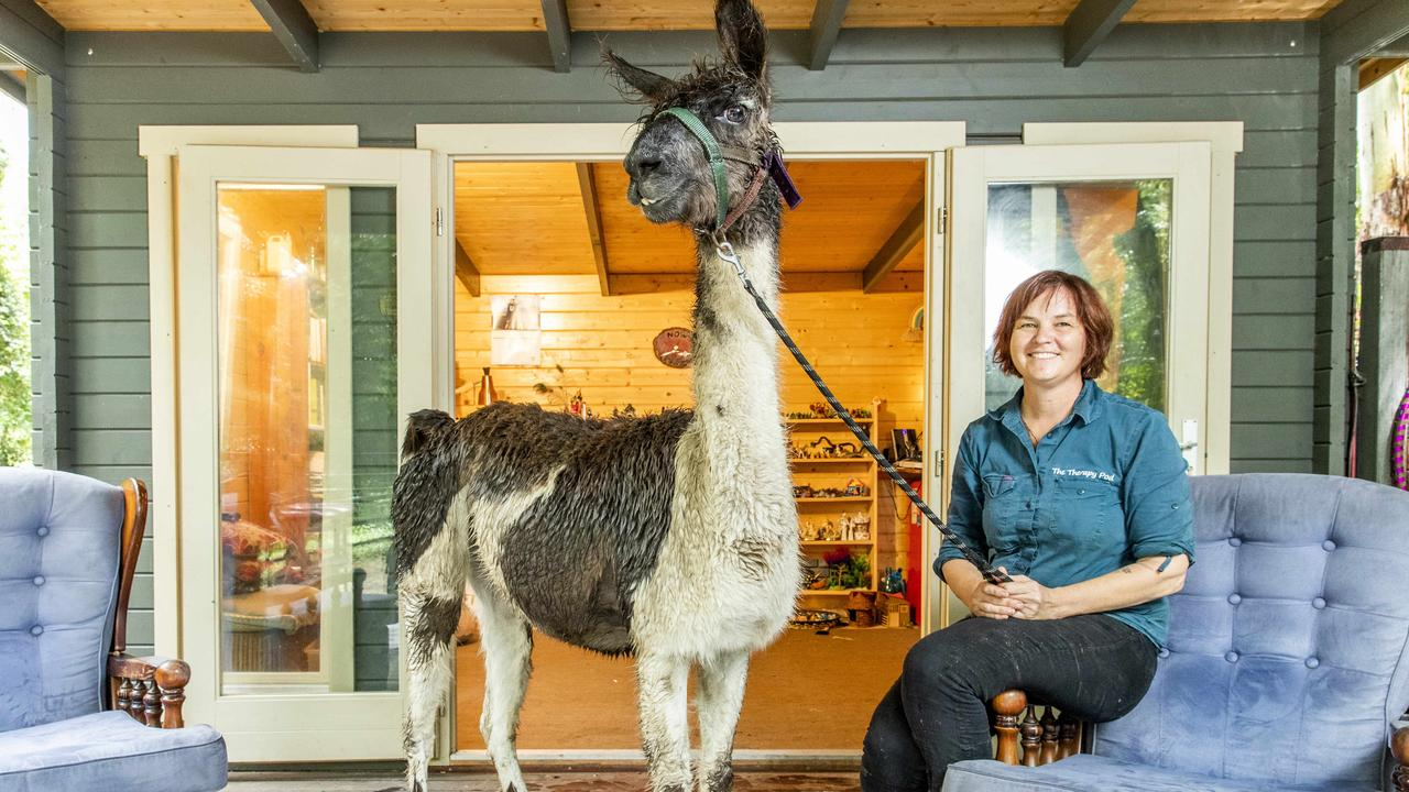 Counsellor Jane Ashton at her Tallebudgera Valley property with Marvin the Llama. Picture: Richard Walker
