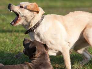 Surprising statistics on dog barking complaints on the Coast
