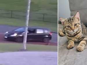 Disturbing video of cat thrown from car 'like garbage'