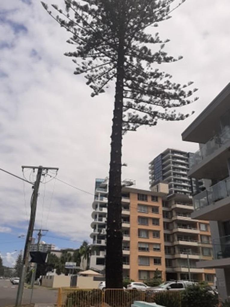 Photos of the tree taken on January 30 2021.