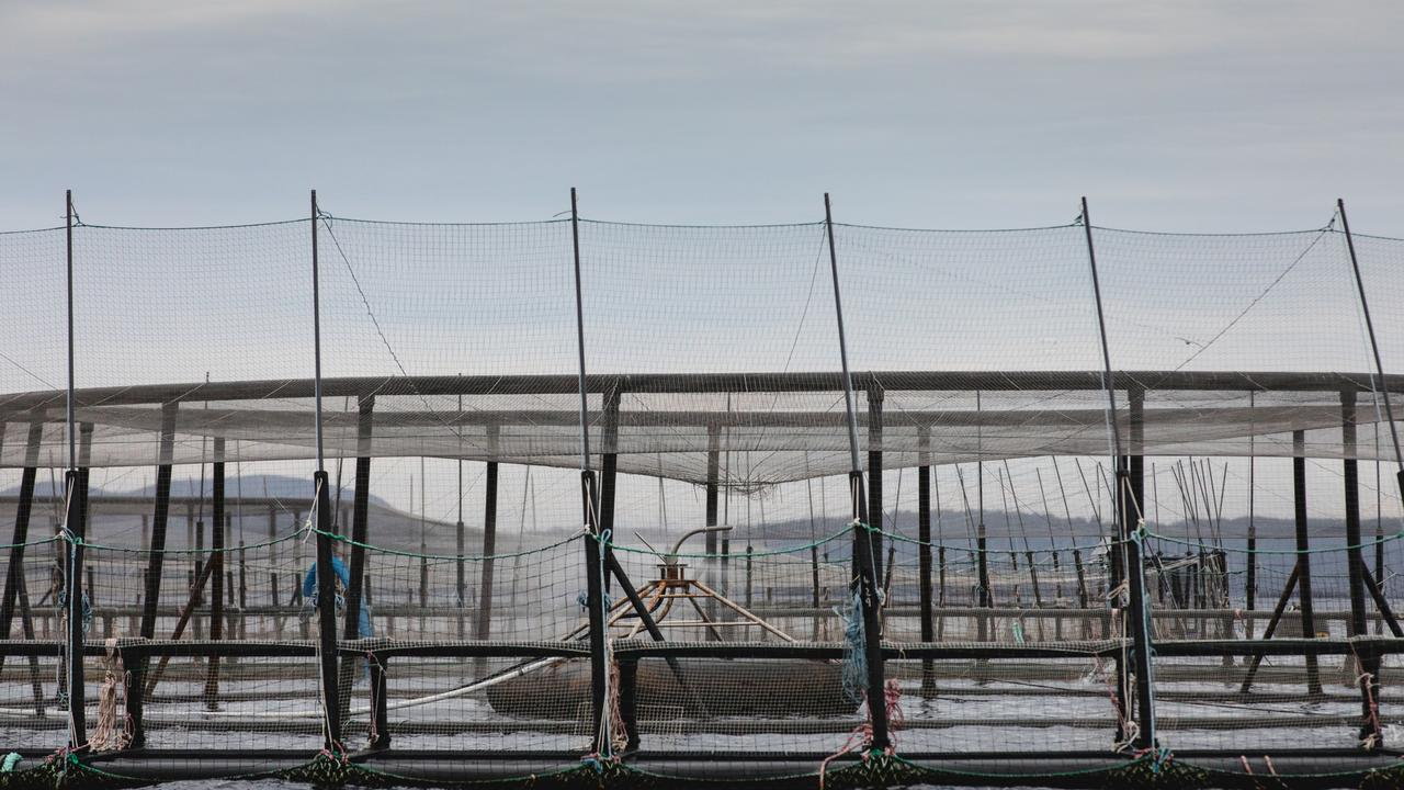 The company also revealed two major salmon escapes resulted in the loss of $1.8m worth of fish. Picture: Huon Aquaculture