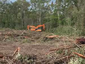 'Appalling': Photos reveal mass tree clearing for development
