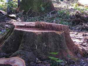 Logging native forests needs to stop