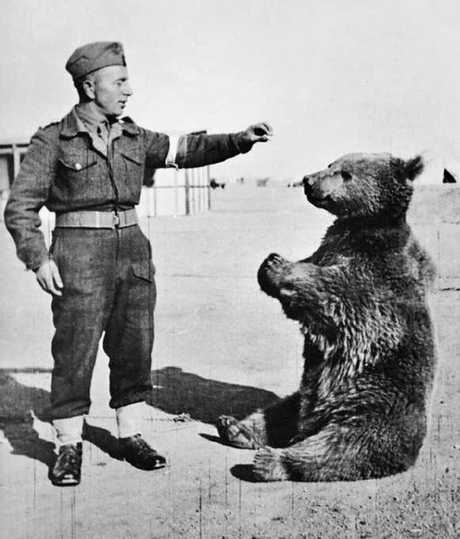 Wojtek was an unlikely ally for the Polish forces in WWII.