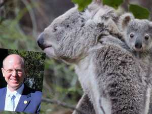 Loggers cut down koala park report, claiming it'll cost jobs