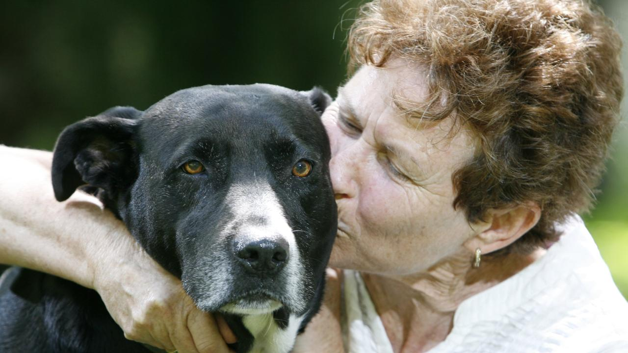 Rhonda Watson thanks her dog Sam after saving her from a raging bull at her Glamorgan Vale property. Sam received an award from the RSPCA for his actions. Photo: Rob Williams / The Queensland Times