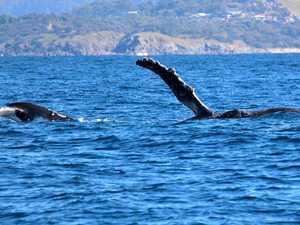 Whale research goes a little bit sci-fi
