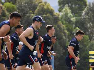Roosters are a hit with fans at Mullumbimby training