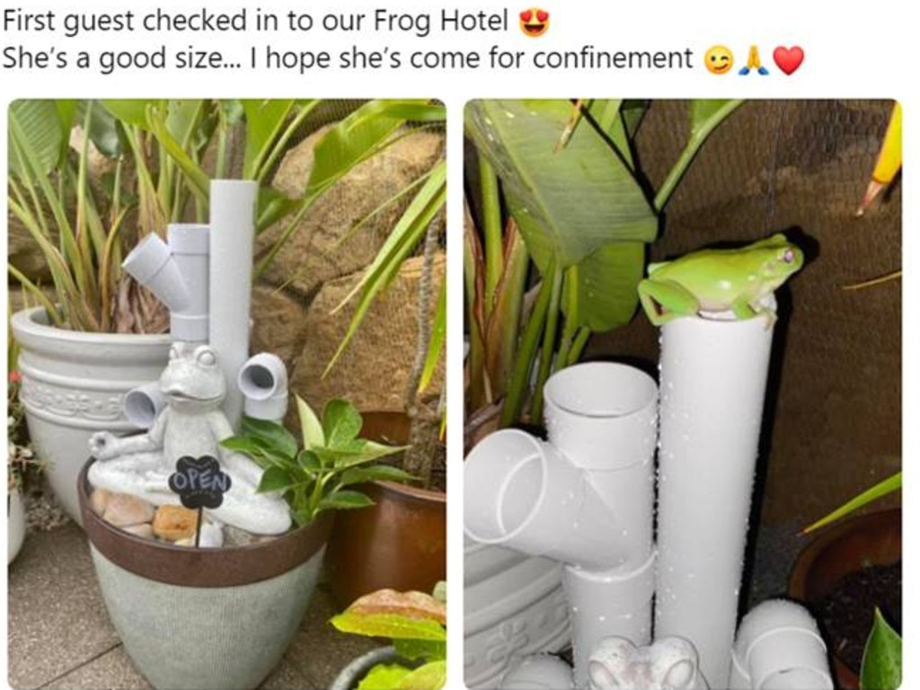 Frog hotels are a thing. Picture: Facebook