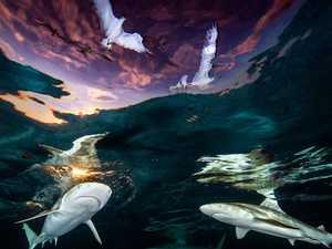 Stunning photo shows circling sharks