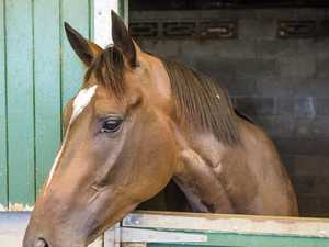 Qld mum blames her kid for not feeding starved horse